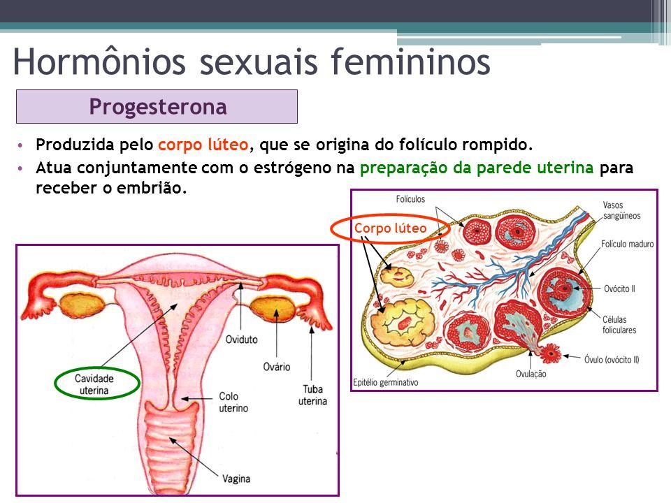 Hormônios sexuais femininos Progesterona Produzida pelo corpo lúteo, que se origina do folículo rompido. Atua conjuntamente com o estrógeno na prepara