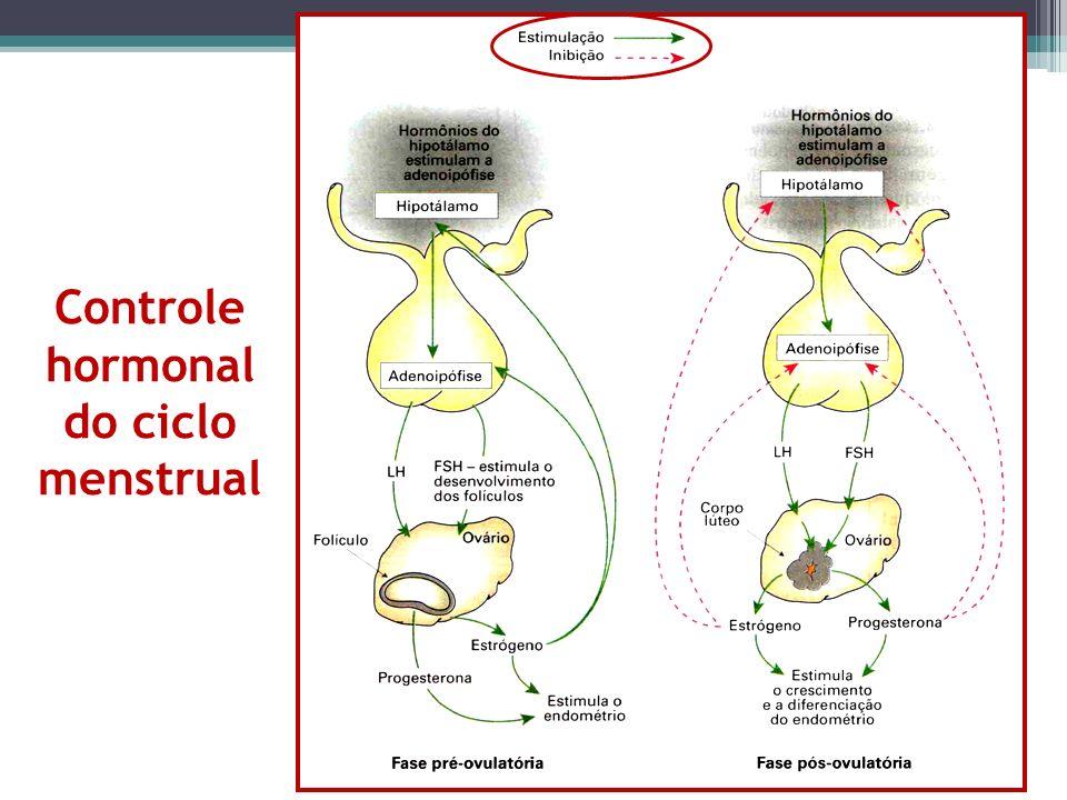 Controle hormonal do ciclo menstrual