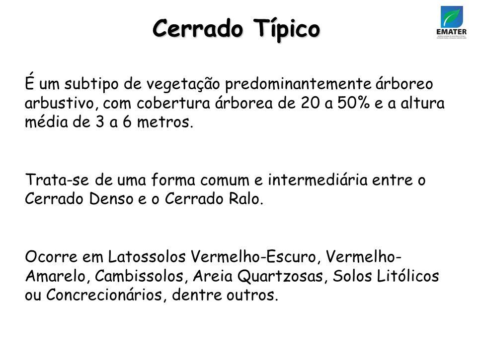 Cerrado Típico É um subtipo de vegetação predominantemente árboreo arbustivo, com cobertura árborea de 20 a 50% e a altura média de 3 a 6 metros.