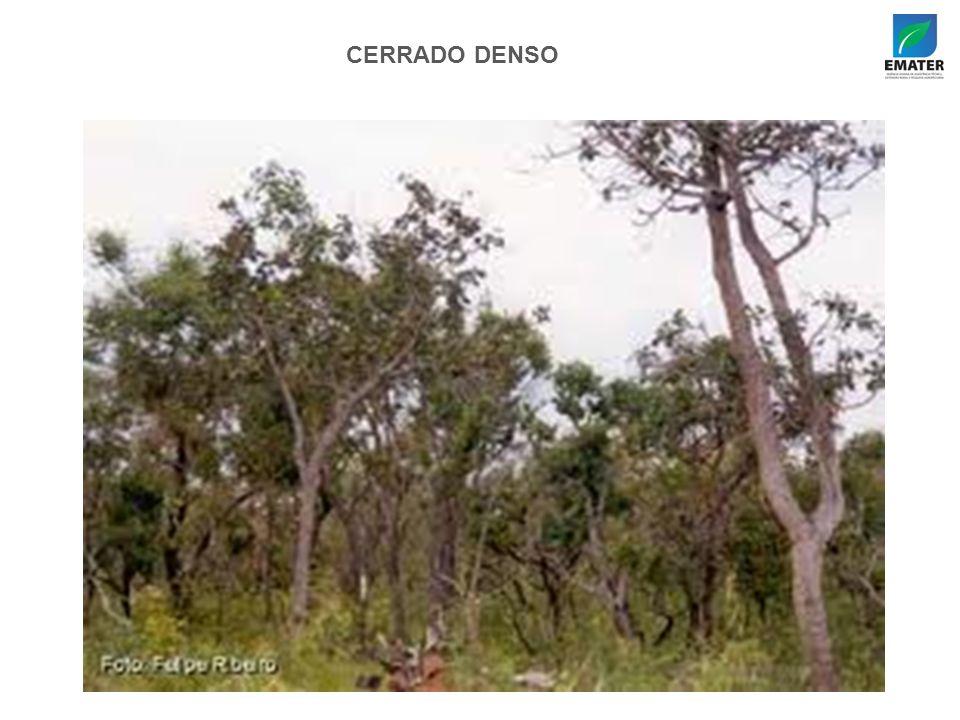 CERRADO DENSO