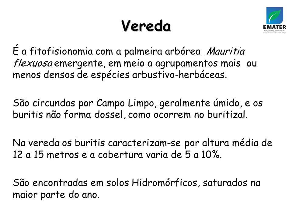Vereda É a fitofisionomia com a palmeira arbórea Mauritia flexuosa emergente, em meio a agrupamentos mais ou menos densos de espécies arbustivo-herbáceas.
