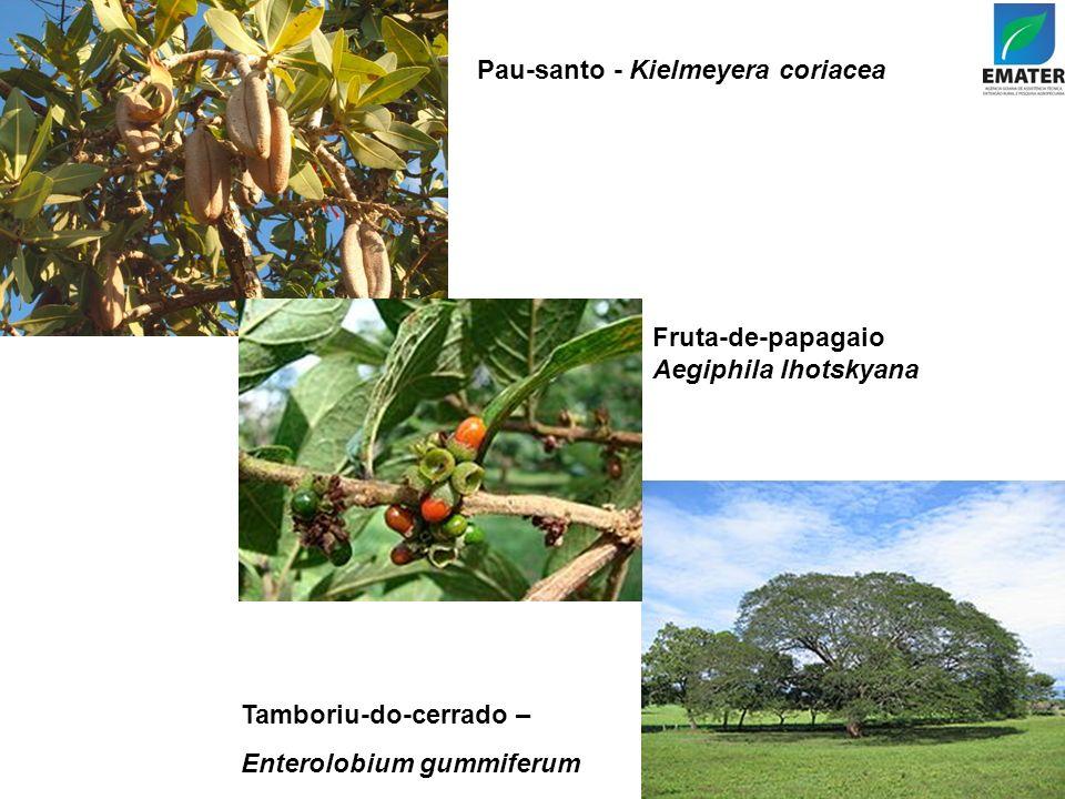 Pau-santo - Kielmeyera coriacea Tamboriu-do-cerrado – Enterolobium gummiferum Fruta-de-papagaio - Aegiphila lhotskyana Pau-santo - Kielmeyera coriacea
