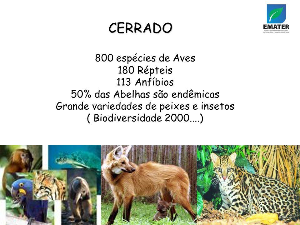 CERRADO 800 espécies de Aves 180 Répteis 113 Anfíbios 50% das Abelhas são endêmicas Grande variedades de peixes e insetos ( Biodiversidade 2000....)