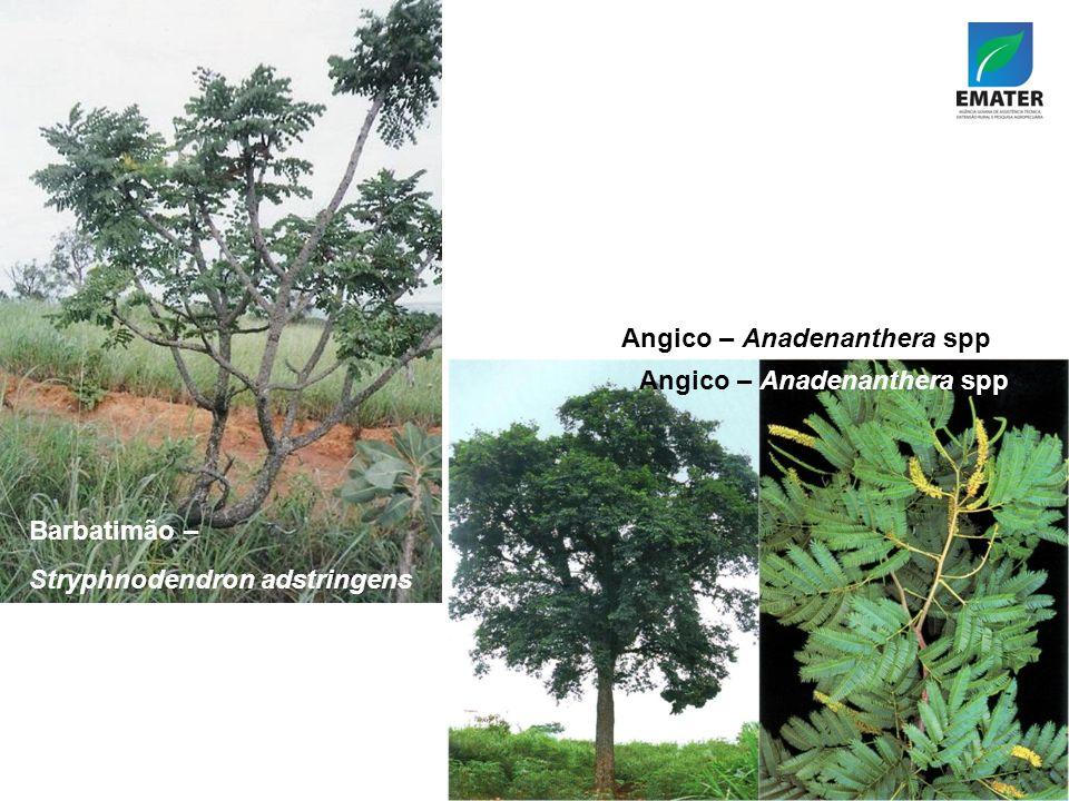 Angico – Anadenanthera spp Barbatimão – Stryphnodendron adstringens Angico – Anadenanthera spp