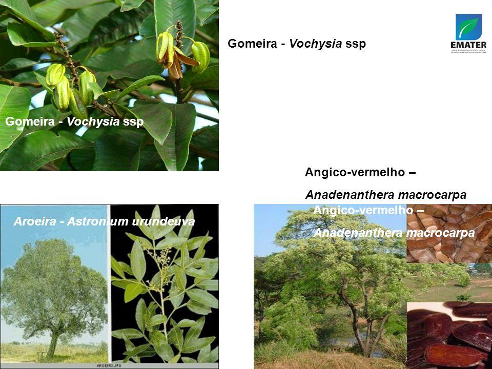 Gomeira - Vochysia ssp Angico-vermelho – Anadenanthera macrocarpa Aroeira - Astronium urundeuva Gomeira - Vochysia ssp Aroeira - Astronium urundeuva Angico-vermelho – Anadenanthera macrocarpa