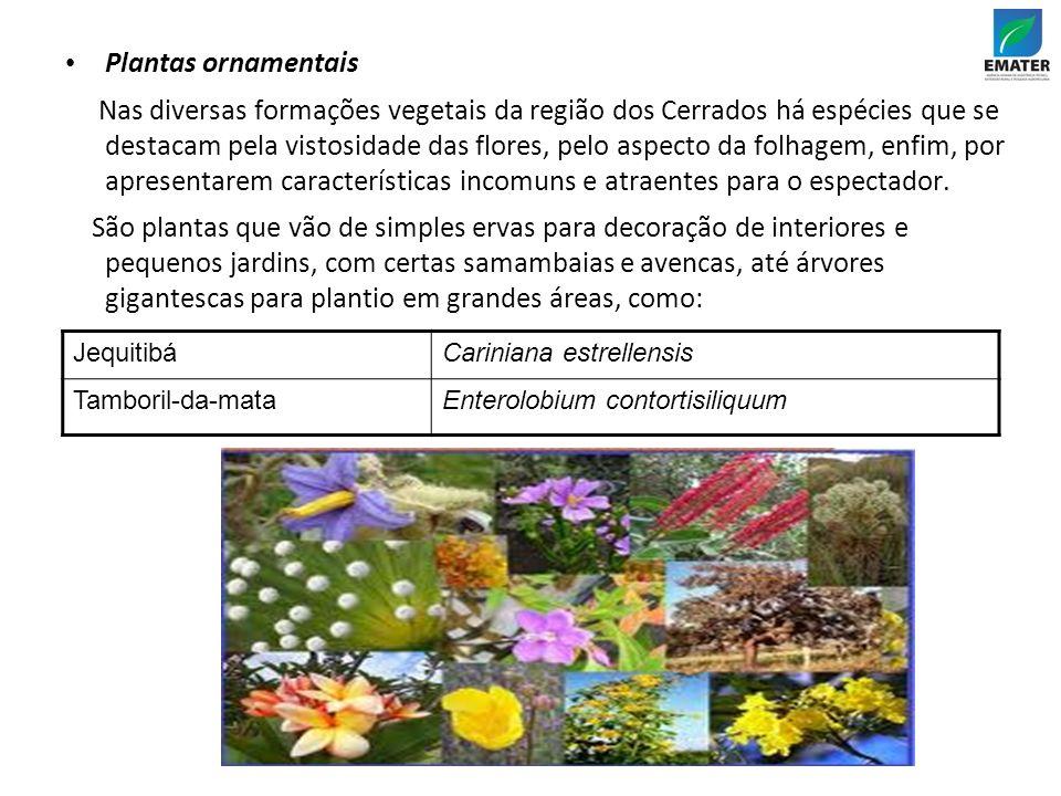 Plantas ornamentais Nas diversas formações vegetais da região dos Cerrados há espécies que se destacam pela vistosidade das flores, pelo aspecto da folhagem, enfim, por apresentarem características incomuns e atraentes para o espectador.