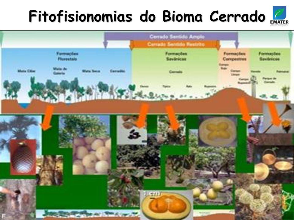 Fitofisionomias do Bioma Cerrado