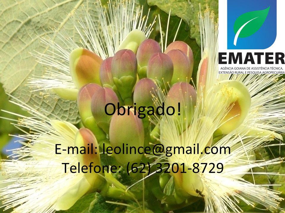 Obrigado! E-mail: leolince@gmail.com Telefone: (62) 3201-8729