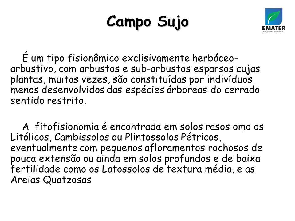 Campo Sujo É um tipo fisionômico exclisivamente herbáceo- arbustivo, com arbustos e sub-arbustos esparsos cujas plantas, muitas vezes, são constituídas por indivíduos menos desenvolvidos das espécies árboreas do cerrado sentido restrito.