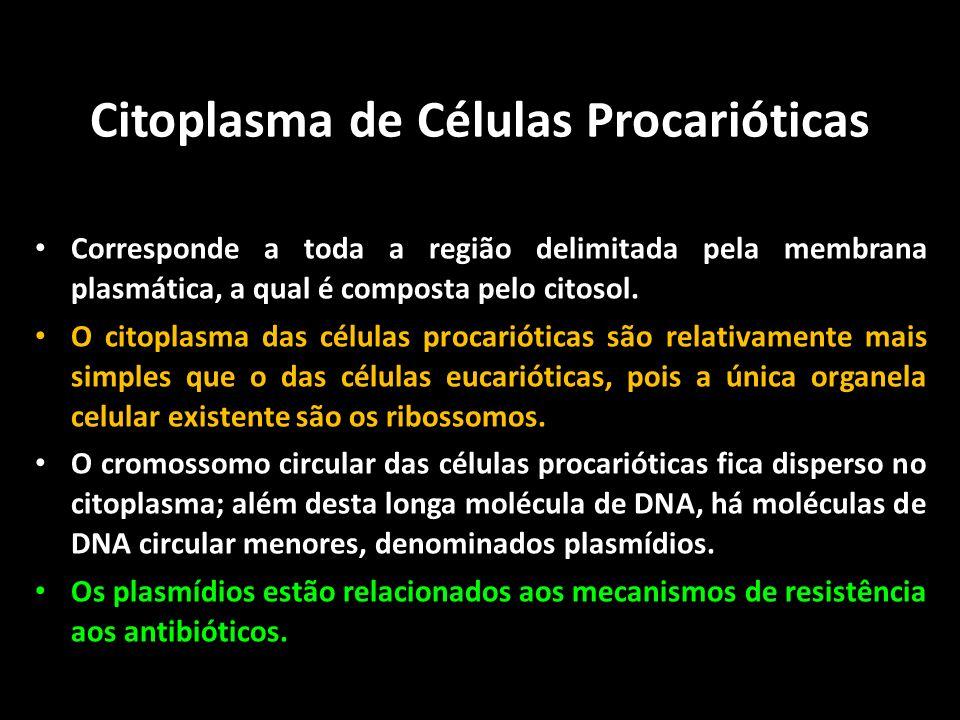 Citoplasma de Células Procarióticas Corresponde a toda a região delimitada pela membrana plasmática, a qual é composta pelo citosol. O citoplasma das