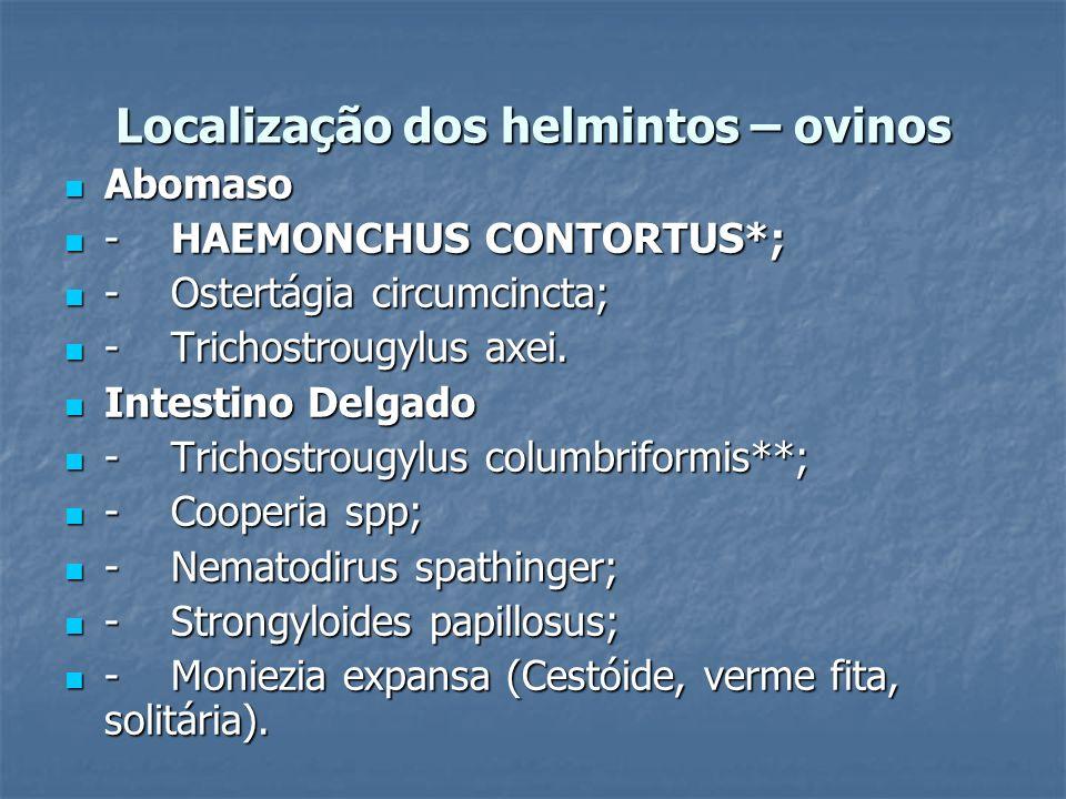 Localização dos helmintos – ovinos Abomaso Abomaso -HAEMONCHUS CONTORTUS*; -HAEMONCHUS CONTORTUS*; -Ostertágia circumcincta; -Ostertágia circumcincta;