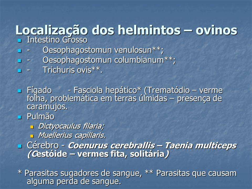 Localização dos helmintos – ovinos Intestino Grosso Intestino Grosso -Oesophagostomun venulosun**; -Oesophagostomun venulosun**; -Oesophagostomun colu