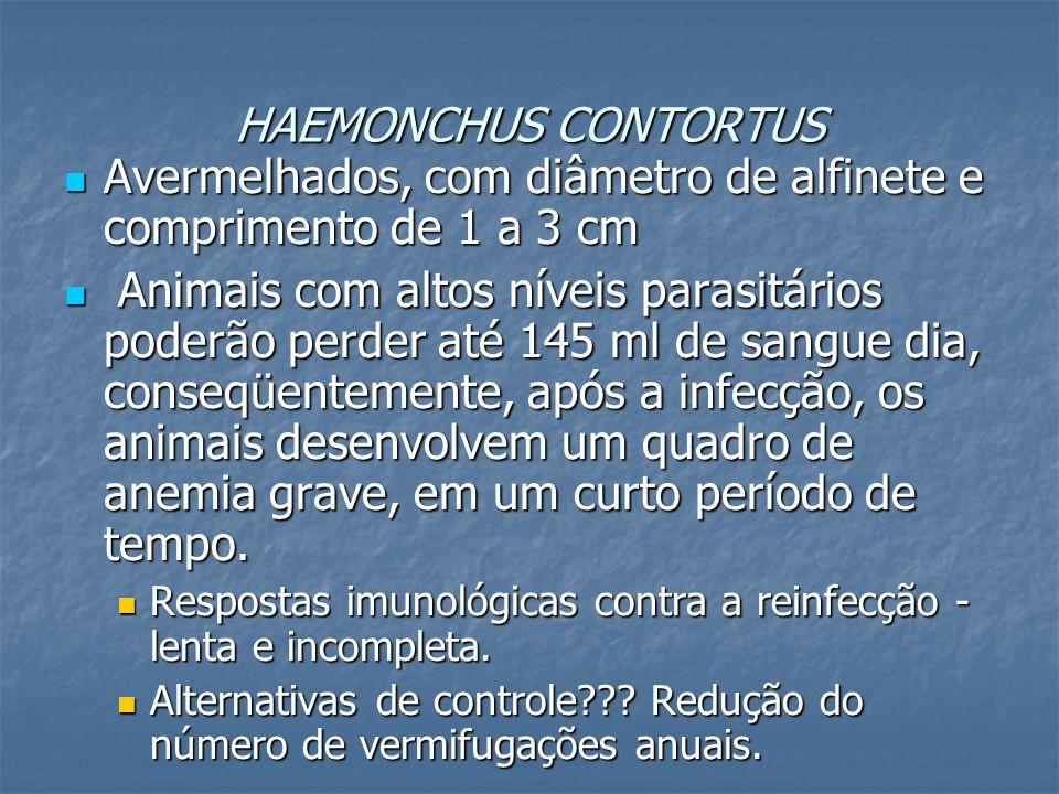 HAEMONCHUS CONTORTUS Avermelhados, com diâmetro de alfinete e comprimento de 1 a 3 cm Avermelhados, com diâmetro de alfinete e comprimento de 1 a 3 cm
