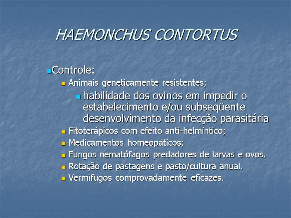 HAEMONCHUS CONTORTUS Controle: Controle: Animais geneticamente resistentes; Animais geneticamente resistentes; habilidade dos ovinos em impedir o esta