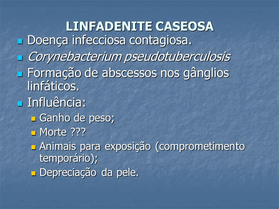 LINFADENITE CASEOSA Doença infecciosa contagiosa. Doença infecciosa contagiosa. Corynebacterium pseudotuberculosis Corynebacterium pseudotuberculosis