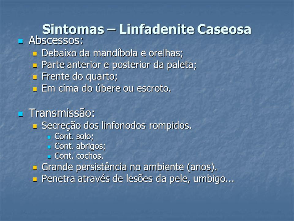 Sintomas – Linfadenite Caseosa Abscessos: Abscessos: Debaixo da mandíbola e orelhas; Debaixo da mandíbola e orelhas; Parte anterior e posterior da pal