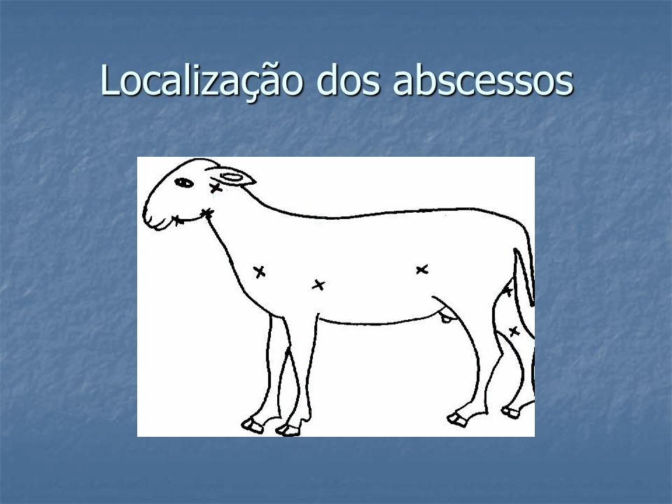 Localização dos abscessos