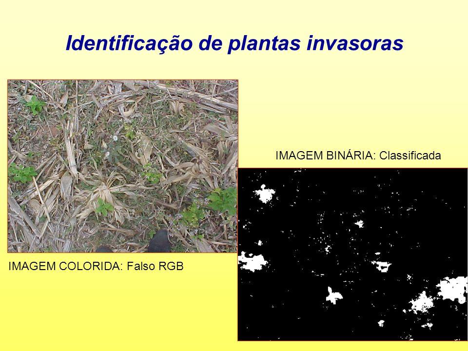 Identificação de plantas invasoras IMAGEM COLORIDA: Falso RGB IMAGEM BINÁRIA: Classificada