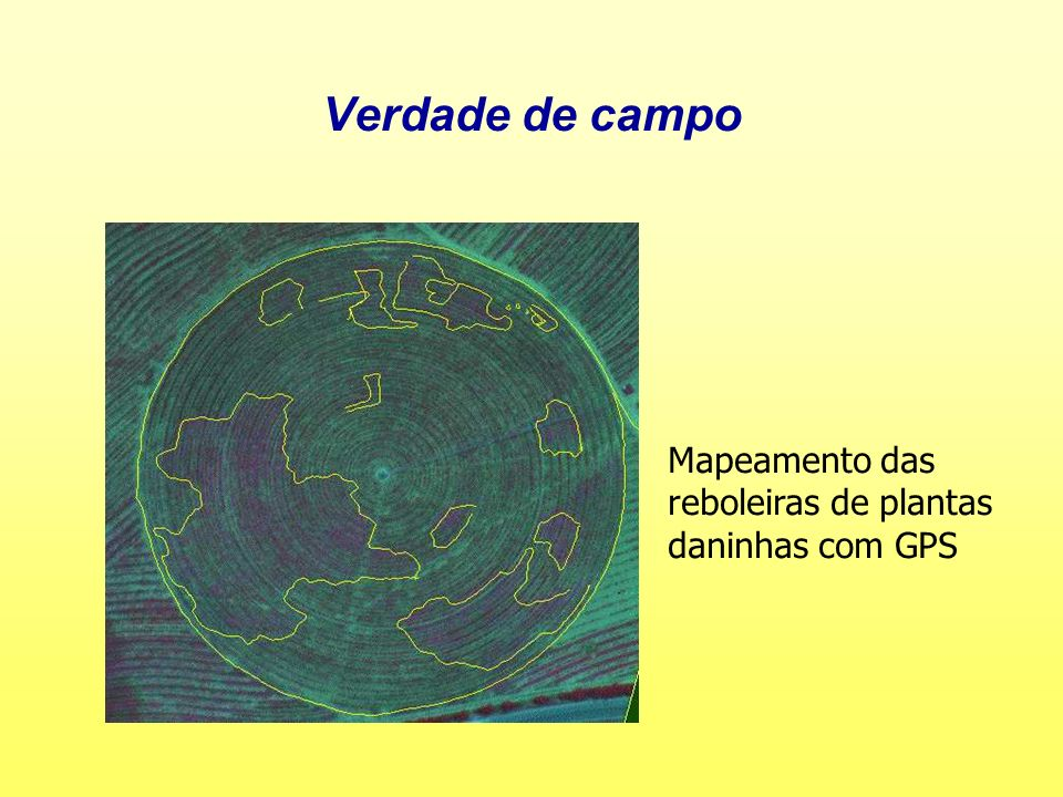 Verdade de campo Mapeamento das reboleiras de plantas daninhas com GPS