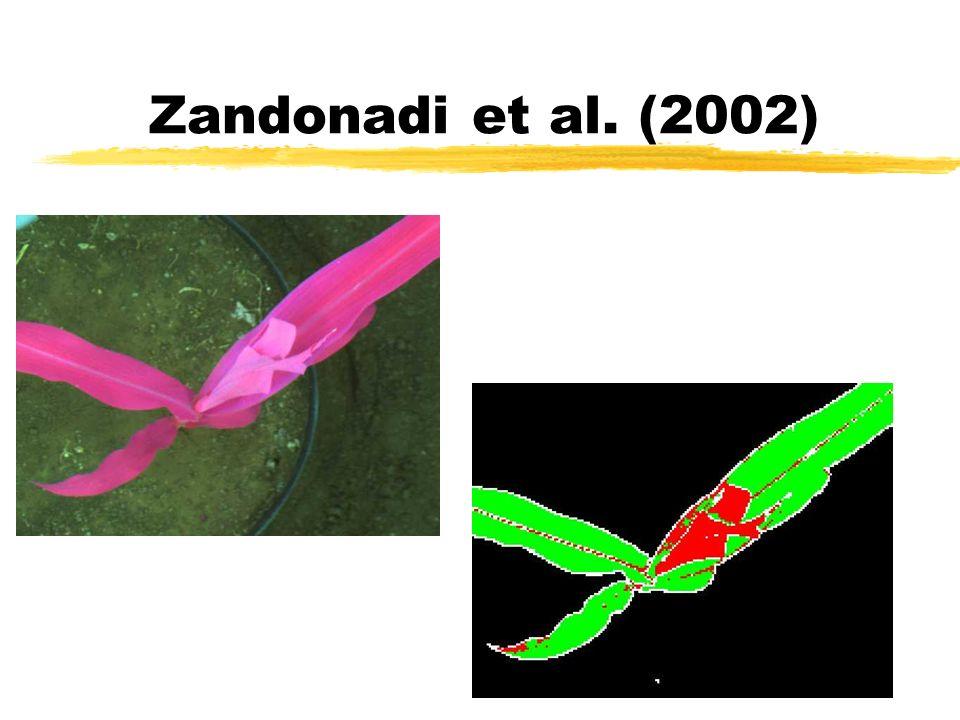 Zandonadi et al. (2002)