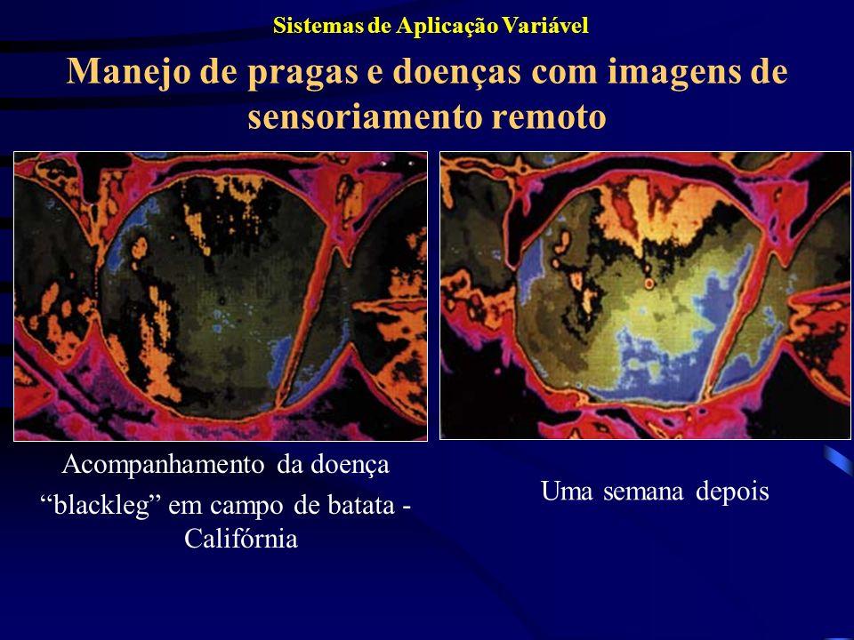 Manejo de pragas e doenças com imagens de sensoriamento remoto Acompanhamento da doença blackleg em campo de batata - Califórnia Uma semana depois Sis