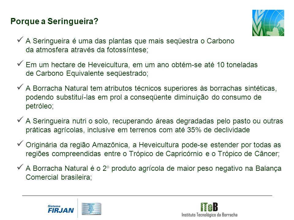 Porque a Seringueira? A Seringueira é uma das plantas que mais seqüestra o Carbono da atmosfera através da fotossíntese; Em um hectare de Heveicultura