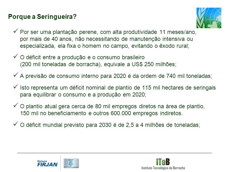 Porque a Seringueira? Por ser uma plantação perene, com alta produtividade 11 meses/ano, por mais de 40 anos, não necessitando de manutenção intensiva