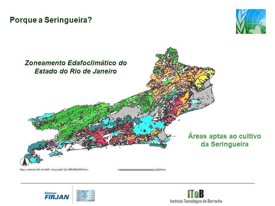 Porque a Seringueira? Áreas aptas ao cultivo da Seringueira Zoneamento Edafoclimático do Estado do Rio de Janeiro