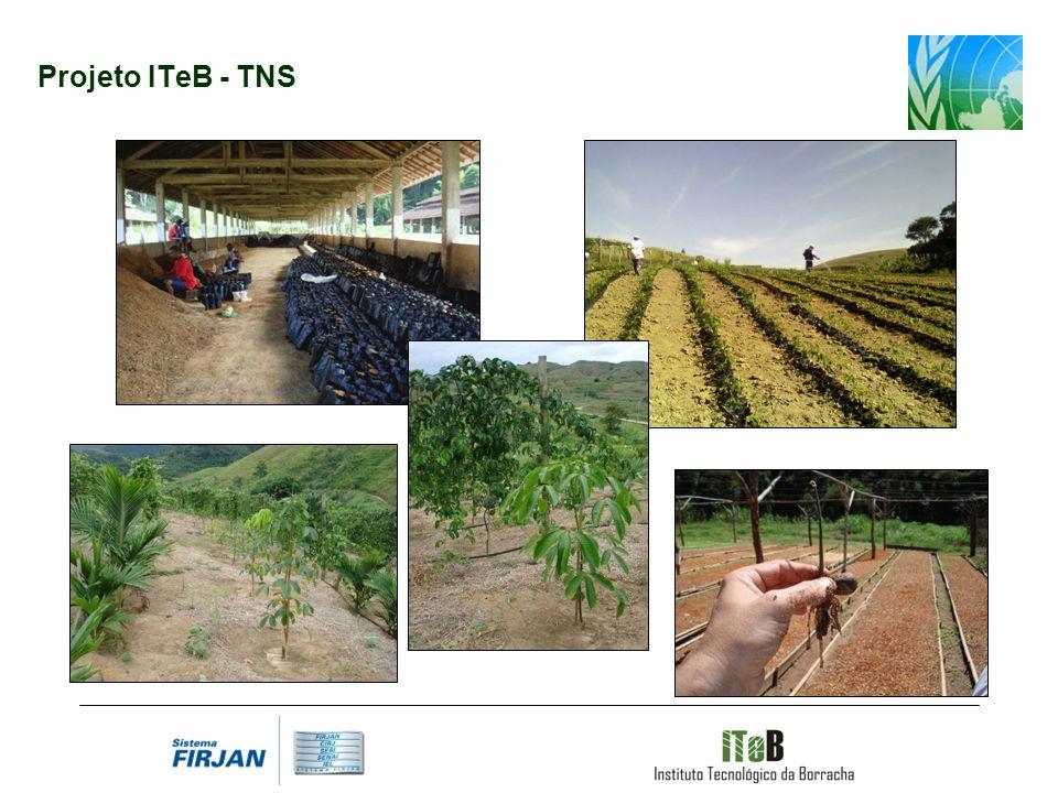 Projeto ITeB - TNS