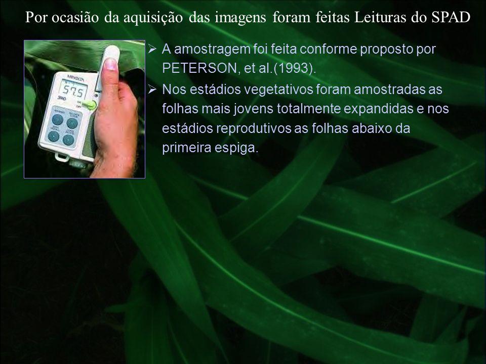 Por ocasião da aquisição das imagens foram feitas Leituras do SPAD Nos estádios vegetativos foram amostradas as folhas mais jovens totalmente expandid