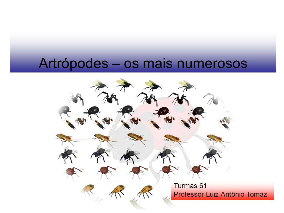 Artrópodes – os mais numerosos Turmas 61 Professor Luiz Antônio Tomaz
