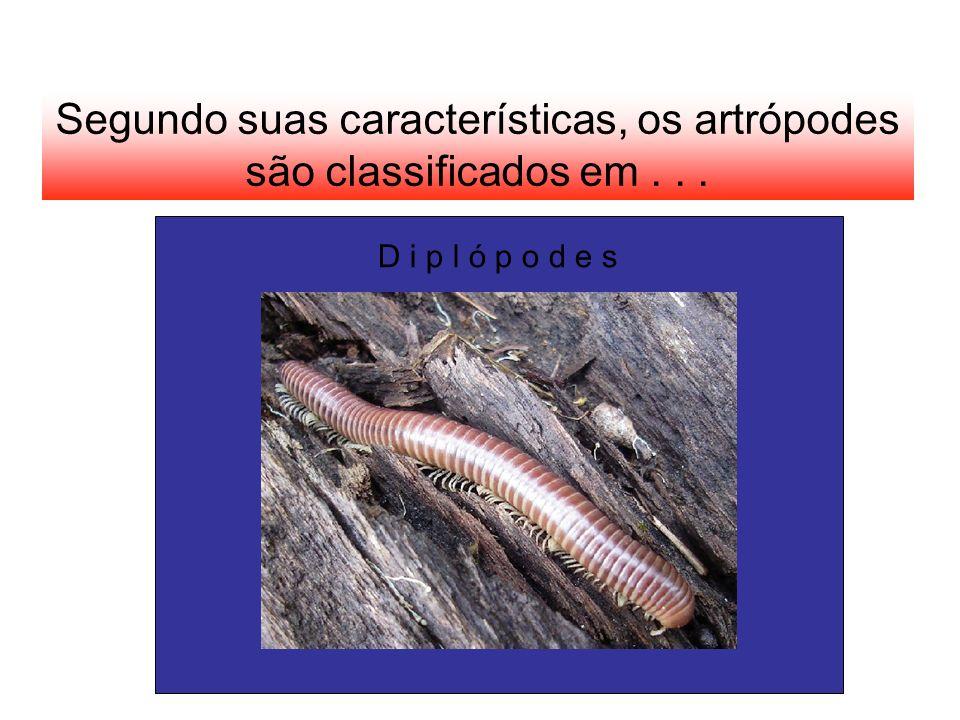 Segundo suas características, os artrópodes são classificados em... D i p l ó p o d e s