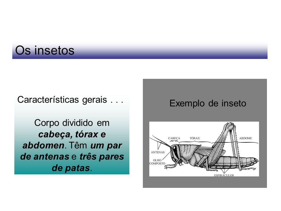 Os insetos Características gerais... Corpo dividido em cabeça, tórax e abdomen. Têm um par de antenas e três pares de patas. Exemplo de inseto