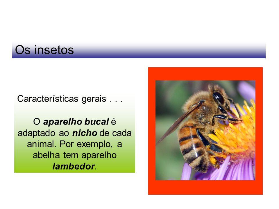 Os insetos Características gerais... O aparelho bucal é adaptado ao nicho de cada animal. Por exemplo, a abelha tem aparelho lambedor.