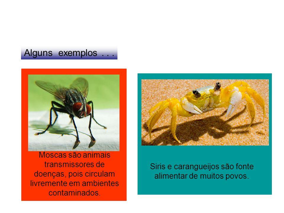 Alguns exemplos... Moscas são animais transmissores de doenças, pois circulam livremente em ambientes contaminados. Siris e carangueijos são fonte ali