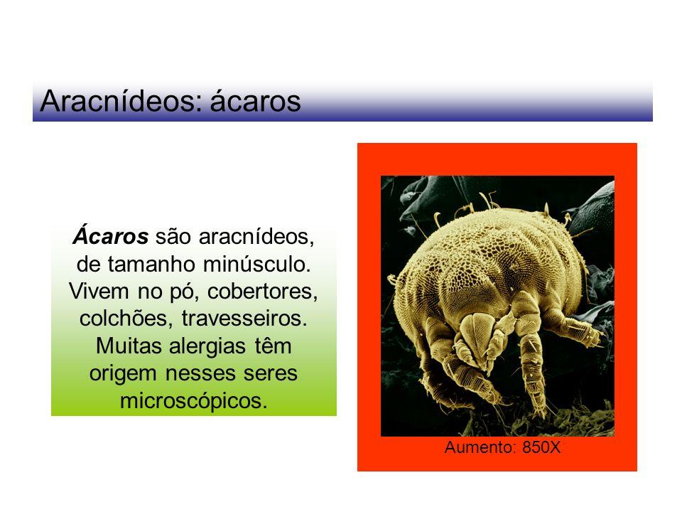 Aracnídeos: ácaros Ácaros são aracnídeos, de tamanho minúsculo. Vivem no pó, cobertores, colchões, travesseiros. Muitas alergias têm origem nesses ser