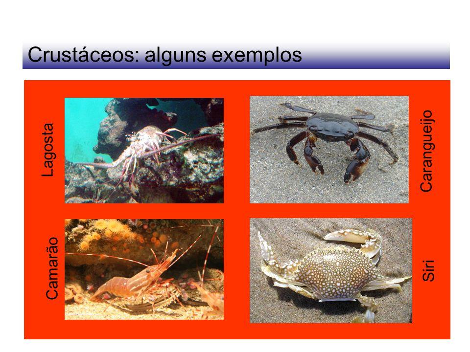 Crustáceos: alguns exemplos Lagosta Camarão Carangueijo Siri