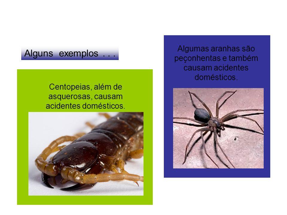 Alguns exemplos... Algumas aranhas são peçonhentas e também causam acidentes domésticos. Centopeias, além de asquerosas, causam acidentes domésticos.