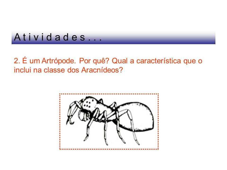 2. É um Artrópode. Por quê? Qual a característica que o inclui na classe dos Aracnídeos? A t i v i d a d e s...