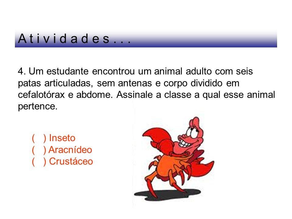 4. Um estudante encontrou um animal adulto com seis patas articuladas, sem antenas e corpo dividido em cefalotórax e abdome. Assinale a classe a qual