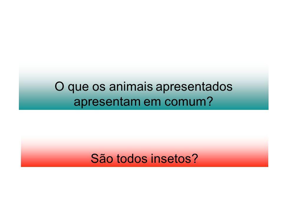 O que os animais apresentados apresentam em comum? São todos insetos?