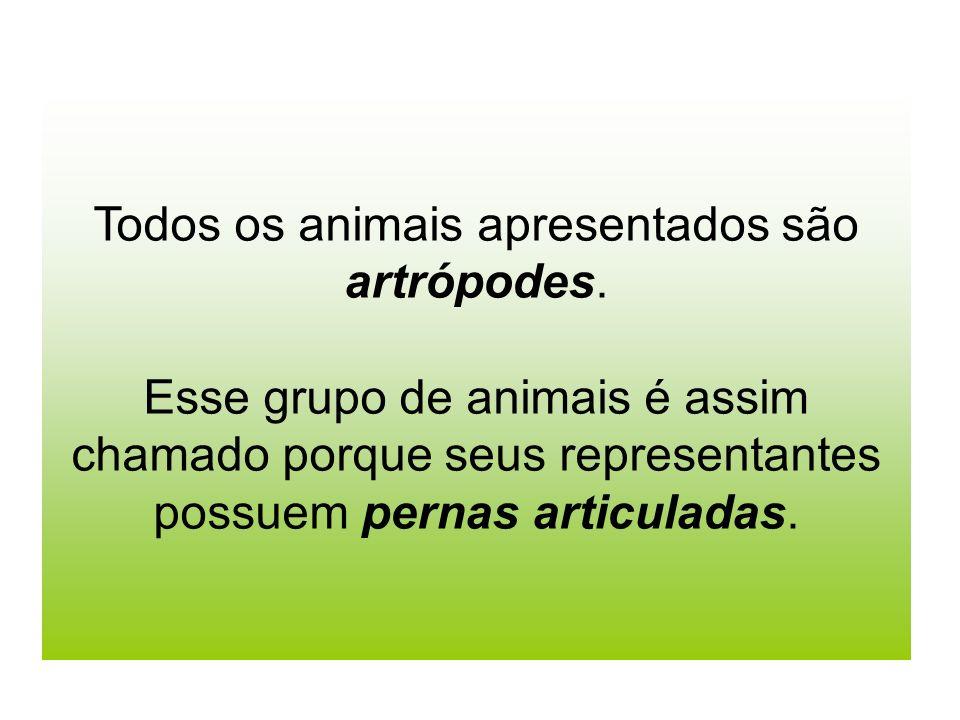 Todos os animais apresentados são artrópodes. Esse grupo de animais é assim chamado porque seus representantes possuem pernas articuladas.