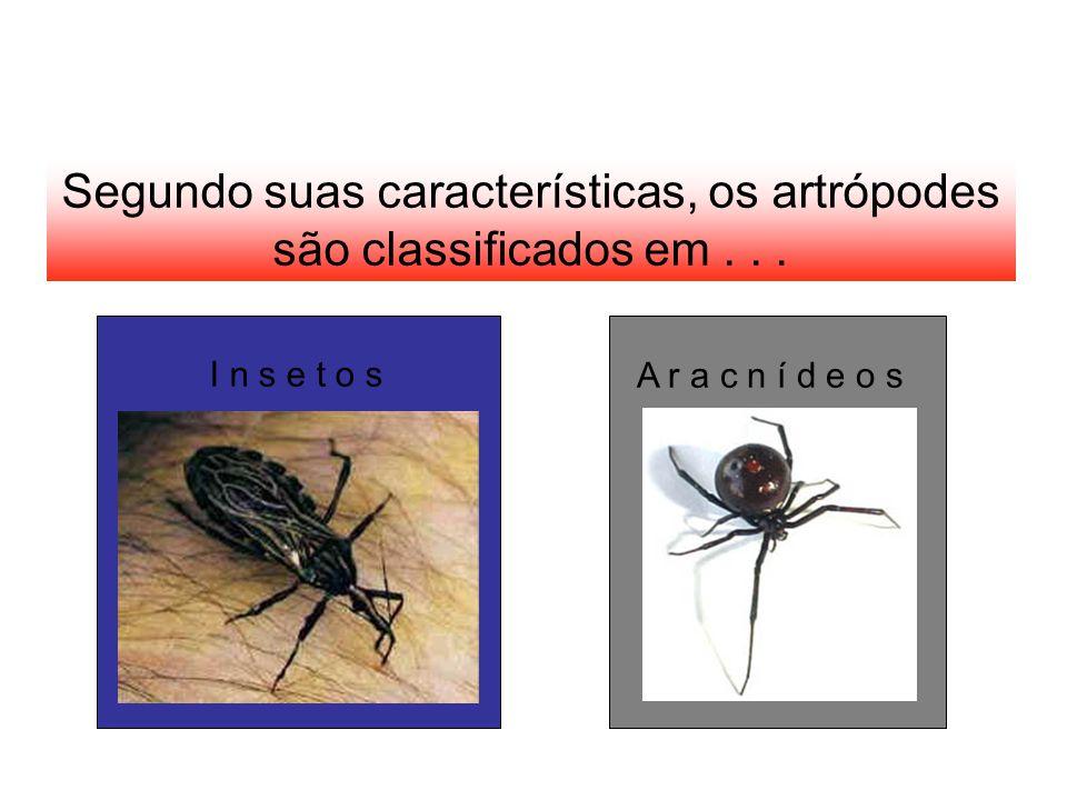 Segundo suas características, os artrópodes são classificados em... I n s e t o s A r a c n í d e o s