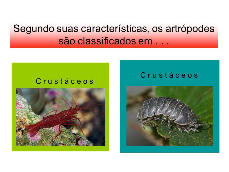 Segundo suas características, os artrópodes são classificados em... C r u s t á c e o s