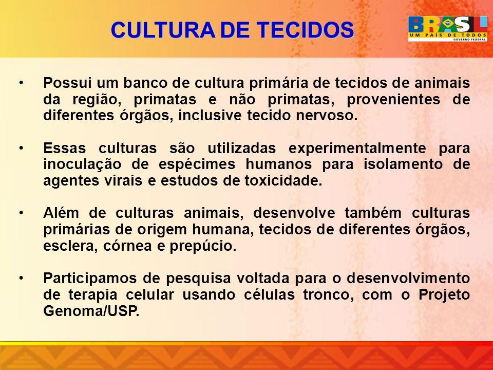 CULTURA DE TECIDOS Possui um banco de cultura primária de tecidos de animais da região, primatas e não primatas, provenientes de diferentes órgãos, in