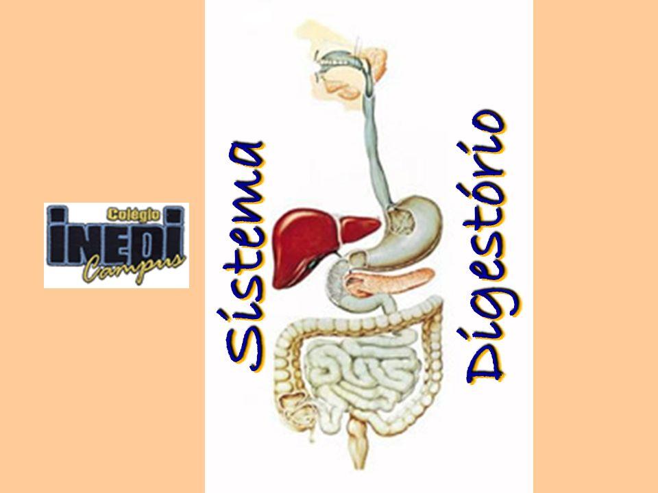 Anatomia do Sistema Digestório O sistema digestório humano é dividido em duas partes: Tubo digestório.