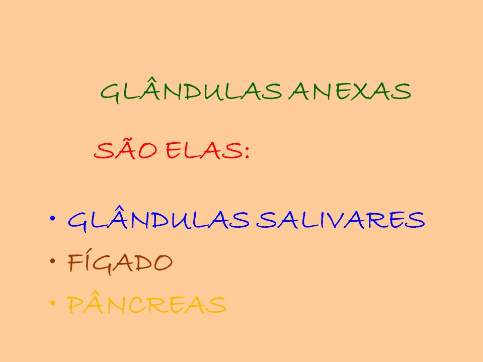 GLÂNDULAS ANEXAS SÃO ELAS: GLÂNDULAS SALIVARES FÍGADO PÂNCREAS