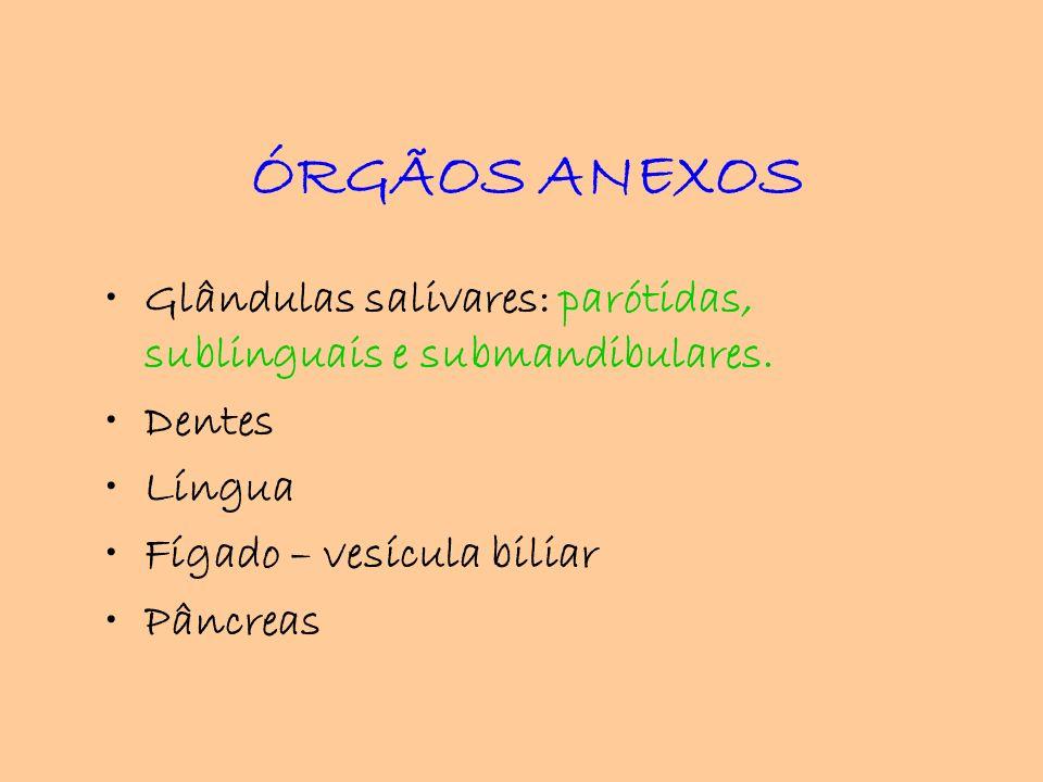 ÓRGÃOS ANEXOS Glândulas salivares: parótidas, sublinguais e submandibulares. Dentes Língua Fígado – vesícula biliar Pâncreas