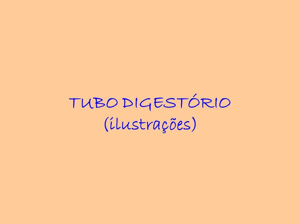 TUBO DIGESTÓRIO (ilustrações)