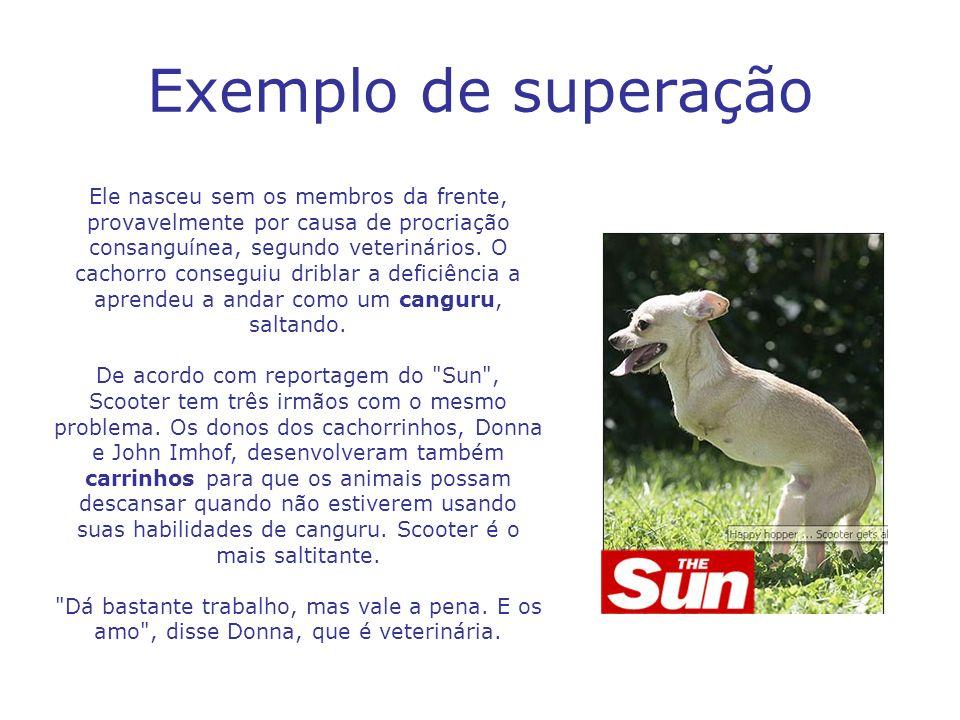 Exemplo de superação Ele nasceu sem os membros da frente, provavelmente por causa de procriação consanguínea, segundo veterinários. O cachorro consegu